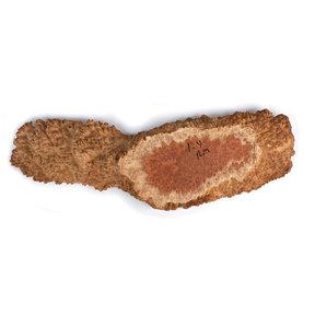 Australian Red Mallee Burl Slice - 1 kg - 2 kg