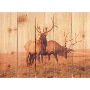 Bull Elk 22.5x16 Wood Art