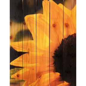 Sunflower 28x36 Wood Art