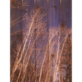Winter Aspens 28x36 Wood Art
