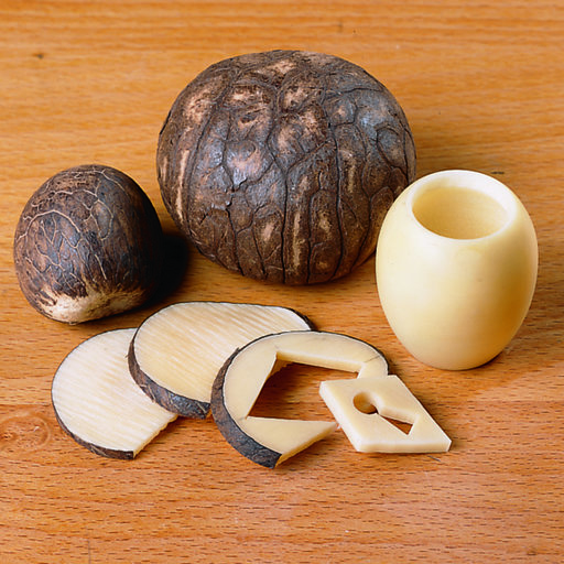 View a Larger Image of 5 pc Tagua Nut Pack