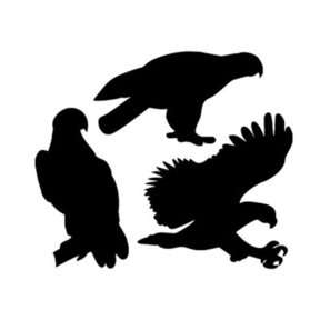Woodworking Project Paper Plan to Build Eagle Pack of Shadow